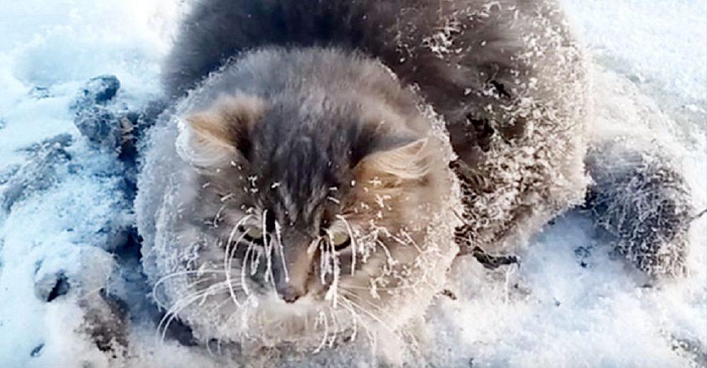 Gato agradece a la pareja que lo salvó al quedar con sus 4 patitas congeladas sin poder moverse