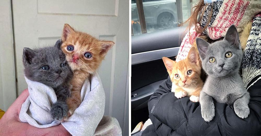 3 gatitos dejados en la puerta de una casa por su madre gata, cambian sus vidas para siempre