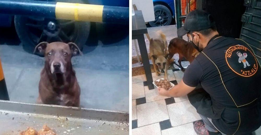 Dueño de un restaurante espera con una comida gratis a cada perrito callejero que lo visita