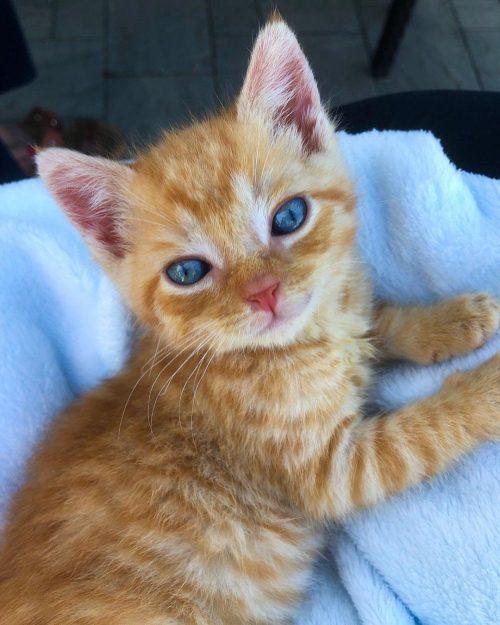 indefenso gatito