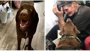 Hombre sin hogar se reúne entre lágrimas con su perro de servicio robado