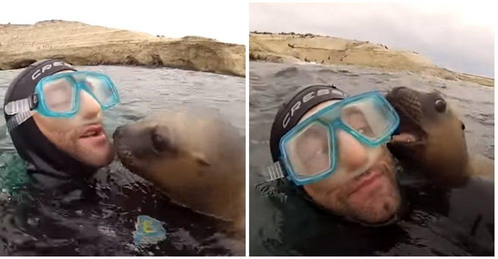 Dulce león marino ve a un buzo y no se contiene las ganas de besarlo
