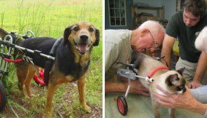 Veterinario de 92 años dedica su vida a construir sillas de ruedas para animales discapacitados