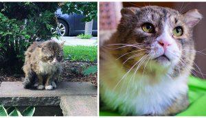 Gato recupera la felicidad y el brillo de sus hermosos ojos, tras una dura vida en las calles