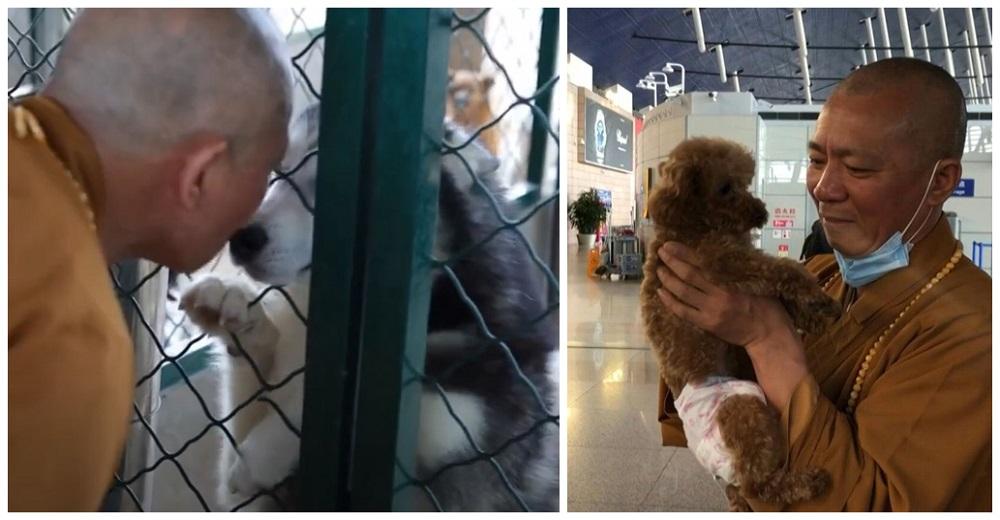 Monje budista salva a más de 8.000 perritos callejeros y los envía a hogares para siempre