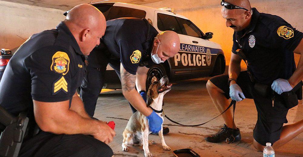 Policías rompen el cristal de un auto ante los ladridos de un perrito atrapado que pedía ayuda