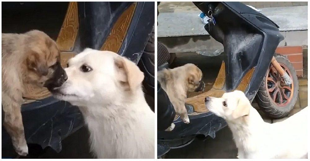Una perrita se despide de su cachorrito con un beso antes de que sea adoptado