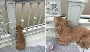 Perrito fiel lleva 4 días esperando a su dueño en el puente donde lo vio saltar