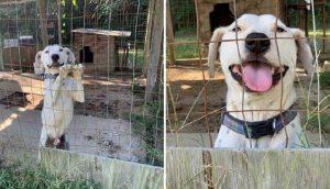 Perrito encerrado en una jaula movía alegremente su colita suplicando ayuda a todo el que pasaba