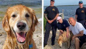 Perrito que estuvo 16 días desaparecido es encontrado nadando a lo largo de la costa
