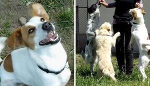 Perritos sin hogar dan las gracias y saltan de felicidad al ser rescatados