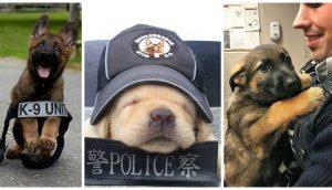 Futuros perros policías intentaron mostrar su «rudeza» al mundo sin saber que se veían adorables