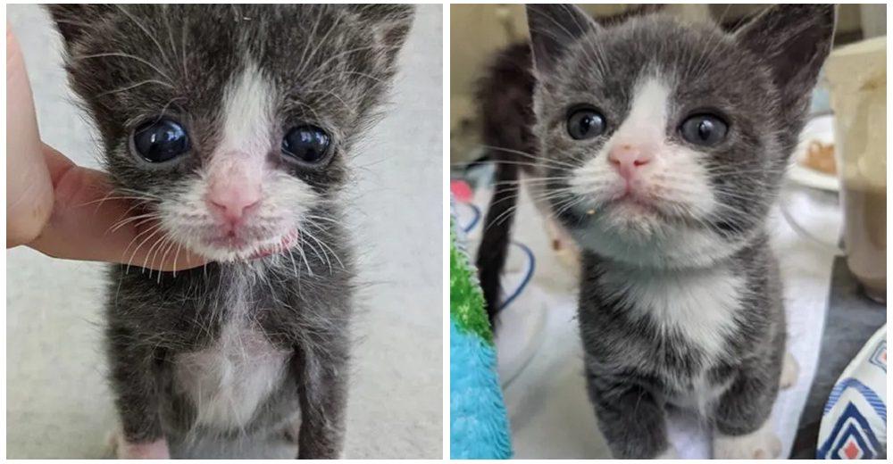 Gatito diminuto con la mitad del tamaño para su edad se aferra a la vidacon todas sus fuerzas