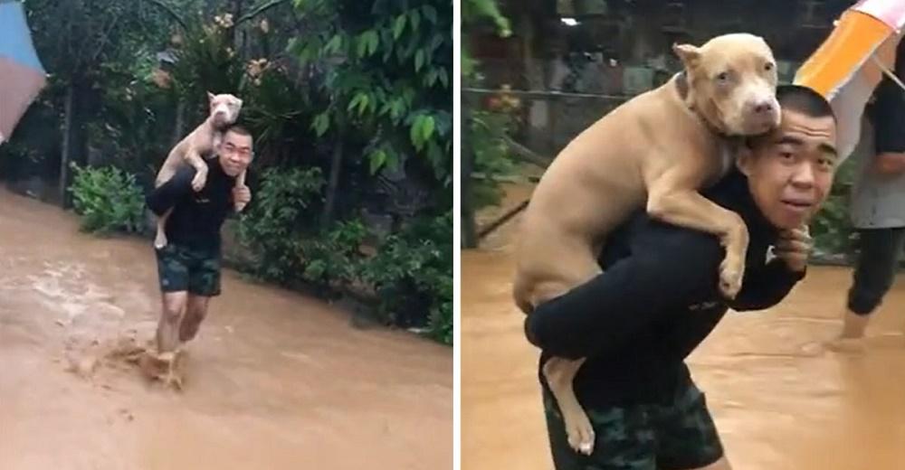 Graban a un soldado cargando a su amado pitbull en la espalda para salvarlo de una inundación