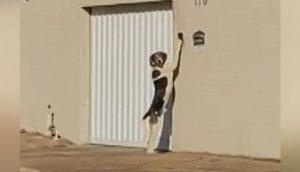 Un perrito enloquece a sus dueños tocando el timbre de su casa a todas horas