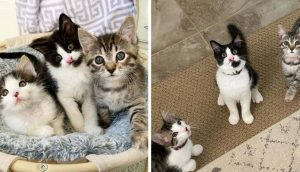 3 gatitos de condición especial con un vínculo adorable cumplen su sueño al ser adoptados juntos
