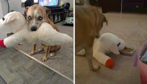Un perrito comparte su comida con su mejor amigo, su peluche favorito