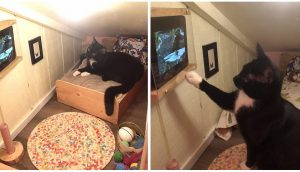 Gato disfruta la vida dentro de su diminuta habitación con televisión que su papá le construyó