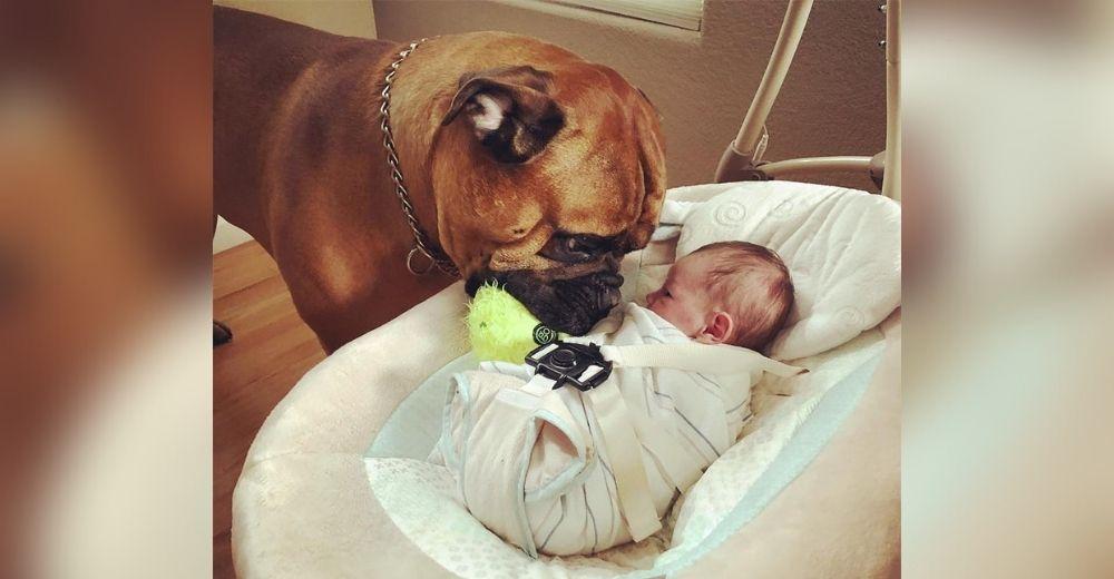 Perro consuela a su hermanito que llora llevándole su juguete favorito