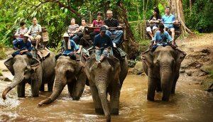 78 elefantes son liberados al fin de las pesadas sillas en las que paseaban a turistas