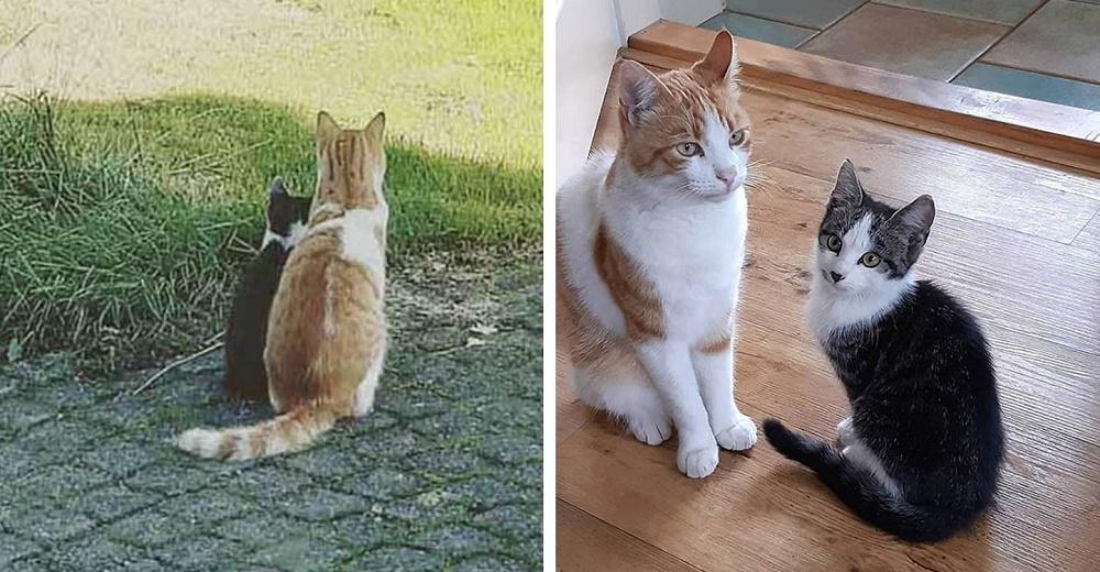 Gato toma bajo su cuidado a un gatito callejero que encontró en el jardín y lo lleva a su casa
