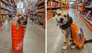 Perrita rescatada por una familia se convierte en la empleada más linda de una tienda