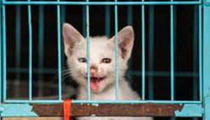 Nueva ley considera a los gatitos y perritos como animalitos de compañía en lugar de ganado