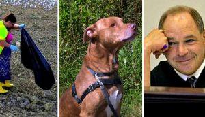 Juez sentencia a los maltratadores de animales dándoles «una cucharada de su propia medicina»