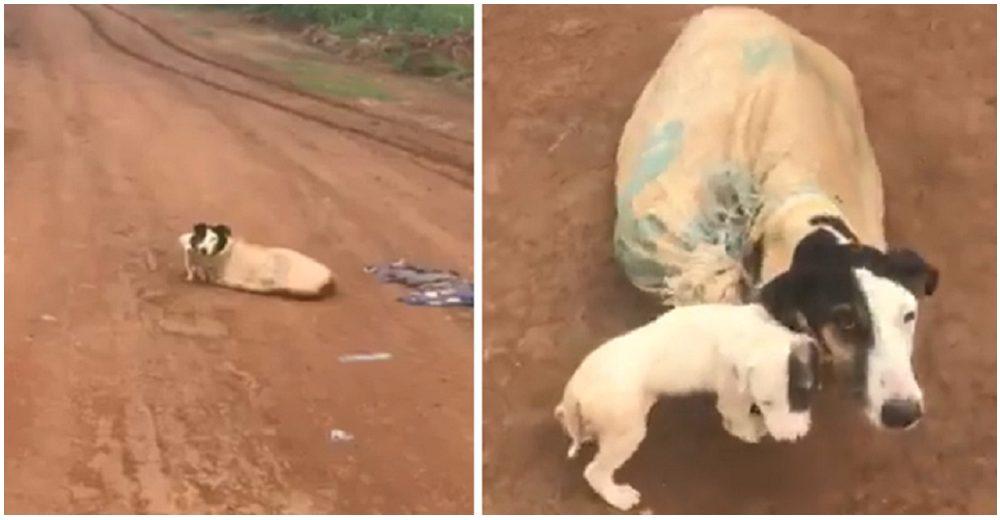 Perrita y sus cachorros atados dentro de un saco en medio de la nada, son salvados por un ángel