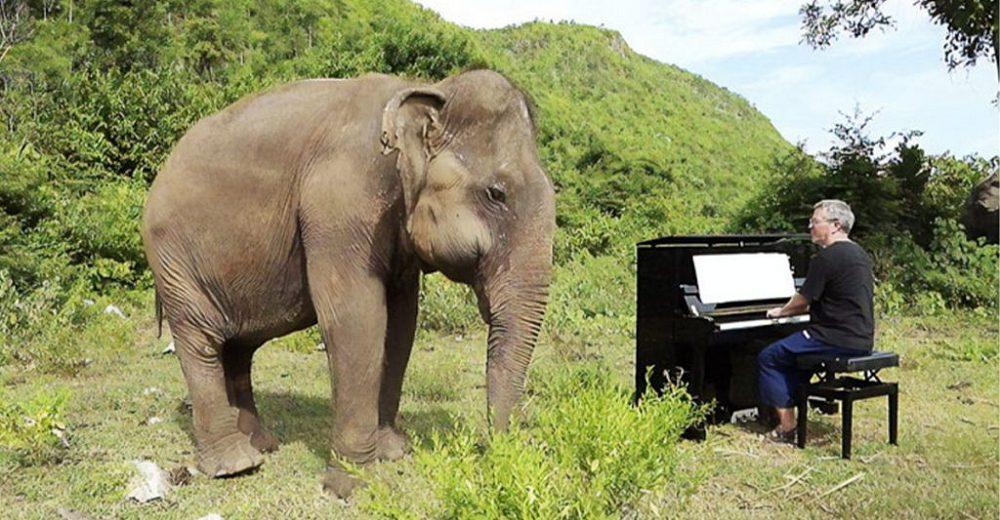 Elefanta ciega reacciona bailando cuando un pianista le dedica un concierto para consolarla