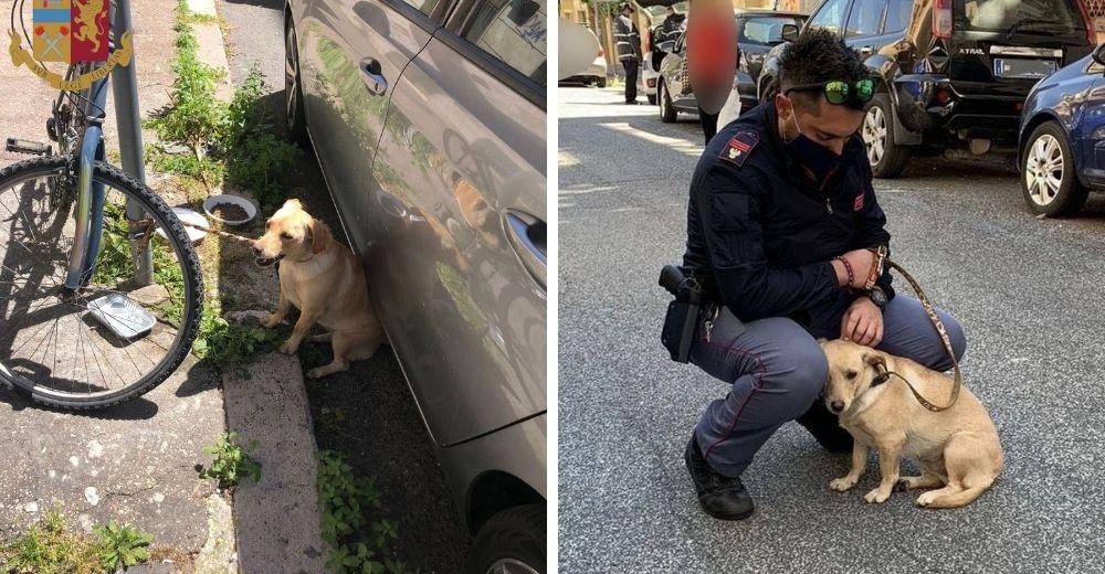 Policía salva a la perrita que fue dejada en un poste bajo el sol y la adopta para siempre