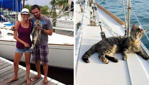 Pareja renuncia a sus empleos para viajar por todo el mundo junto a su amado gato