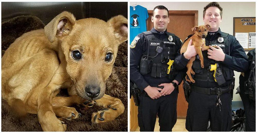 Cachorrita que la encontraron encerrada en una habitación estaba tan feliz al ver a sus héroes