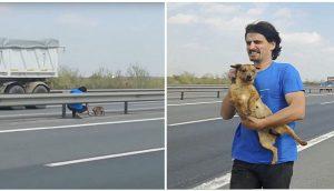 Veterinario expone su vida para salvar a una perrita temblorosa abandonada en la autopista