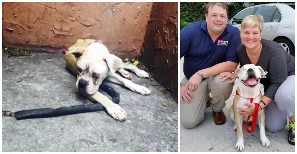 Rescatan a la perrita que pasó encadenada por días afuera de su casa tras la muerte de su dueño