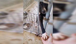 Perrito de un refugio quiere tomar la mano de todo el que pase a su lado buscando algo de afecto