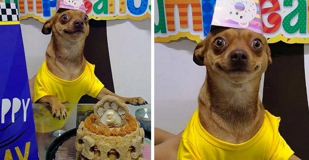 Pequeño perrito está tan feliz de que su familia se acordó de su cumpleaños