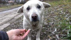 Perrito perdido queda con el corazón roto al querer volver a casa pero su familia lo rechazó