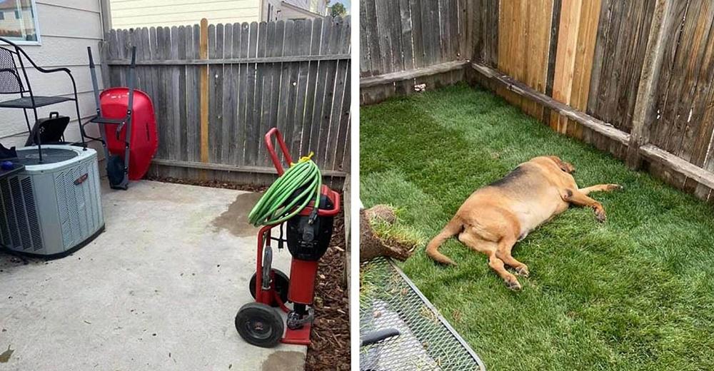 Perrito rescatado nunca tuvo un patio antes, así que su mamá le construyó uno para él