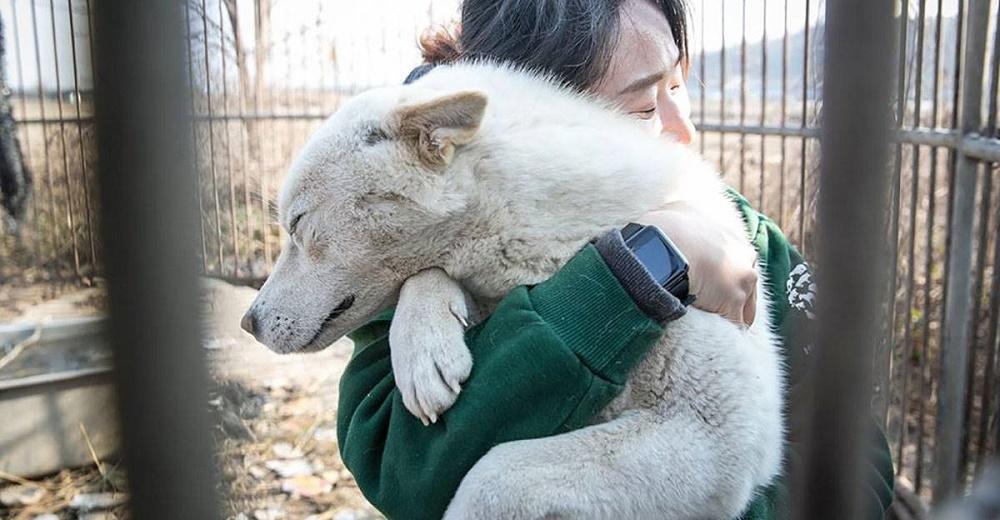 70 perritos destinados al consumo al fin son rescatados tras pasar meses encerrados en jaulas