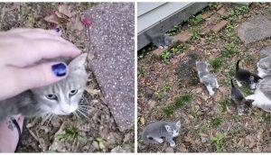 Gatita callejera lleva a sus bebés para presentarles a la mujer que la ha estado alimentando