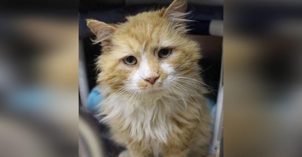 Gato recorre 19 kilómetros para reunirse con su antigua familia que lo abandonó
