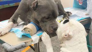 Dos dulces perritos se consuelan mutuamente al ser rescatados después de morir su dueño