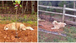 Perrito de 3 patas llora sobre la tumba de sus amigos del santuariocada vez que fallece uno