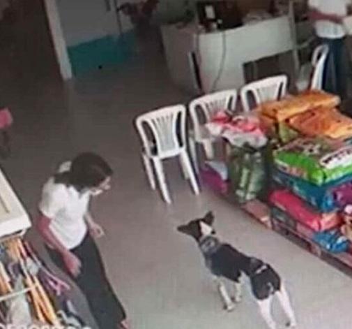 Perro ingresa a una clínica veterinaria por sus propios medios
