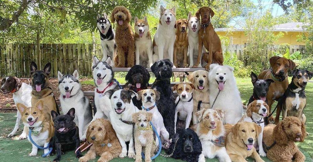 Guardería canina hace lo imposible y logra las fotografías grupales perfectas de perritos