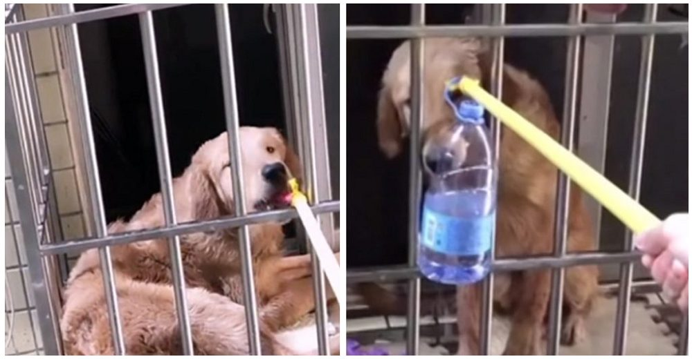 Vecina salva a un pobre perrito abandonado alimentándolo desde la ventana