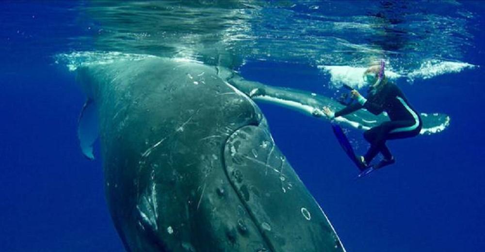 Una ballena se apresura a salvar a una buceadora de un tiburón gigante