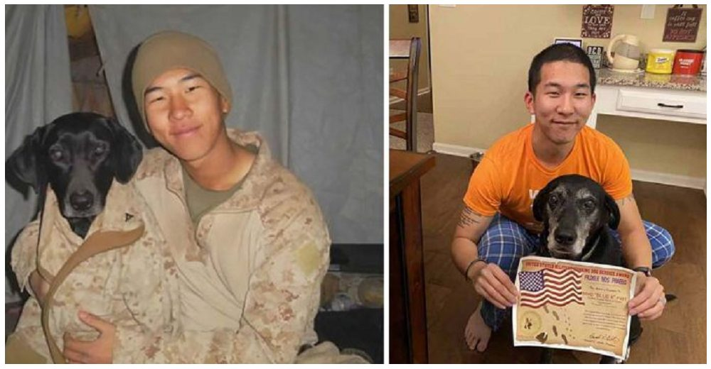 Veterano de la marina lucha por dar con la perrita que le salvó la vida en la guerra y la adopta