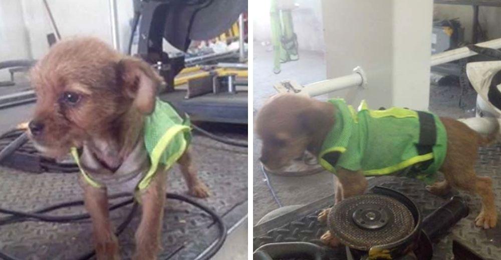 Rescatan a un pobre cachorrito que arrojaron por la ventana desde un auto en movimiento